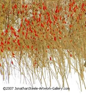winter scene, red and brown photograph,
